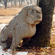 Historic, 2500-year-old Confucian Forest, Qufu